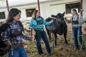 Isabelle Diehl, 14, center, chats with friends Chloe Nieto, right, and Grace Stern, left, as they get ready to show their animals in the Intermediate Beef Showmanship contest Tuesday, Aug. 18, 2020 at the Midland County Fairgrounds. Isabelle took first place in the category, while Grace took third and Chloe took fourth. (Katy Kildee/kkildee@mdn.net)