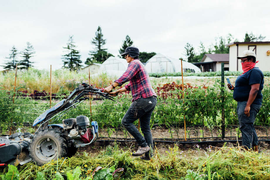 Radical Family Farms is a regenerative mixed-Asian vegetable farm in Sebastopol (pictured: the farm in June, 2020). Photo: Sarah Deragon/Portraits To The People / Sarah Deragon