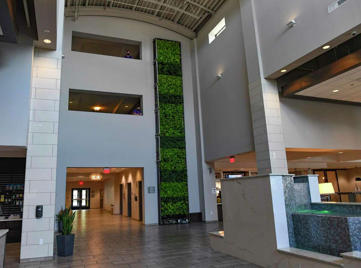 This green wall, which consists of schefflera and neon pothos, is located in the lobby of the Embassy Suites at Brooks City Base.