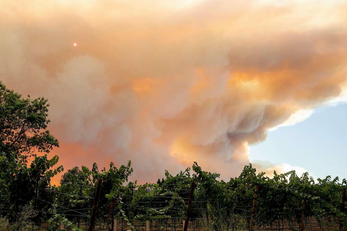 Large plumes of smoke from the Walbridge Fire in Sonoma County waft over grapevines from the ridge along Wallace Creek Road west of Healdsburg, Calif. seen from Eastside Road Thursday, August 20, 2020. The Walbridge Fire stands at 14,000 acres and is 0% contained as of Thursday.