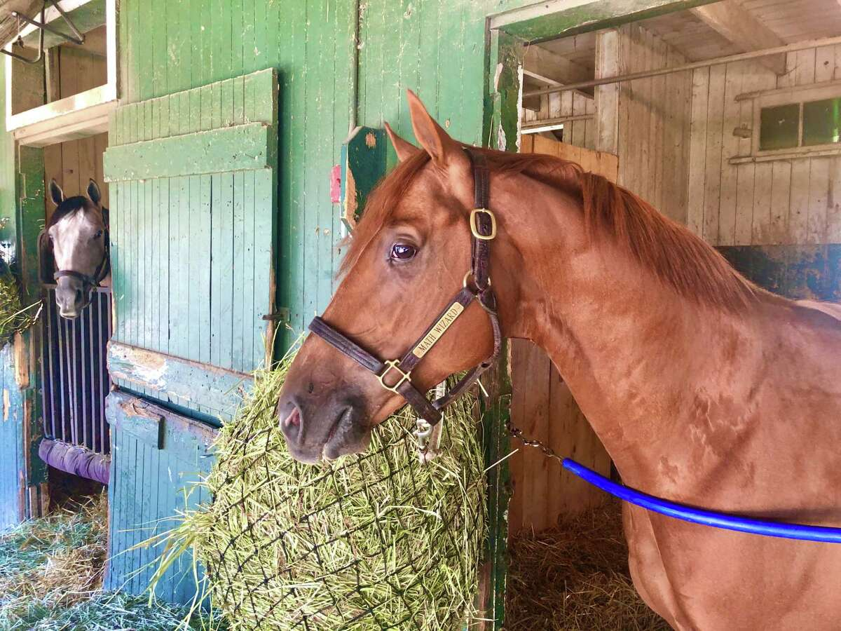 Remember Math Wizard? He was the upset winner of last year's Pennsylvania Derby, winning it at odds of 31-1. He's here at Saratoga at trainer Saffie Joseph Jr.'s barn. The 4-year-old might run in the Woodward on the final weekend of the meet. He is getting an eyeful from his 3-year-old stablemate Ny Traffic, who is getting ready to run in the Kentucky Derby in two weeks. (Tim Wilkin / Times Union)