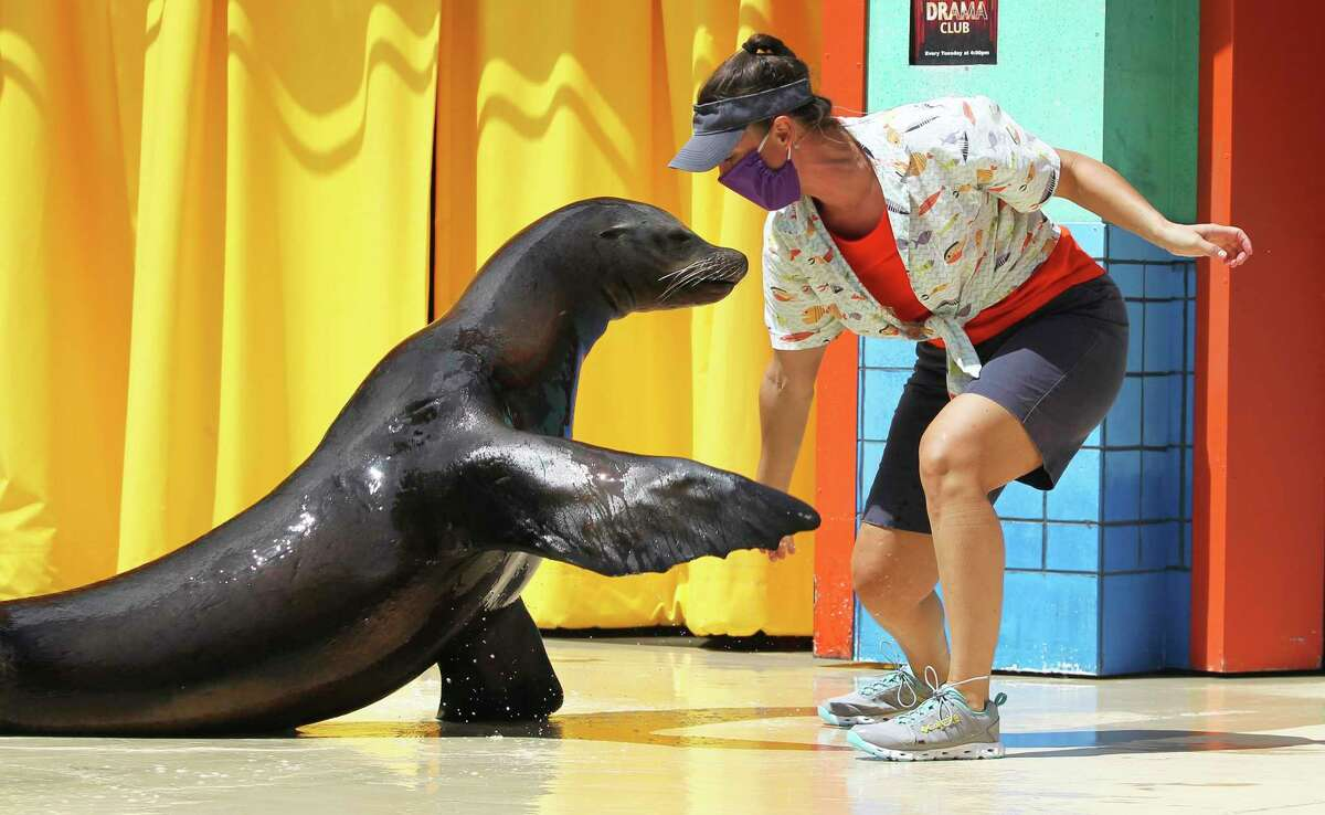 Human performers wear masks at Sea Lion High as Seaworld entertains a limited amount of guests on July 30, 2020.