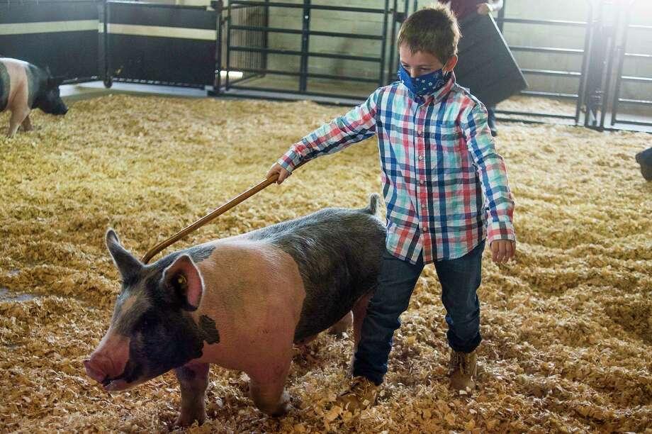 Ethan Alexander shows his hog Thursdaymorning at the Midland County Fairgrounds. (Katy Kildee/kkildee@mdn.net)