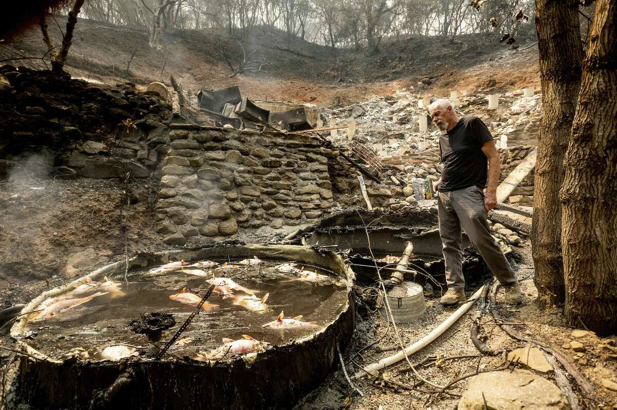 Bob, who declined to give a last name, examines tanks holding multiple koi fish at his Vacaville, Calif., home on Friday, Aug. 21, 2020. The residence burned as the LNU Lightning Complex fires ripped through the area Tuesday night killing the fish but sparing his nine cats.