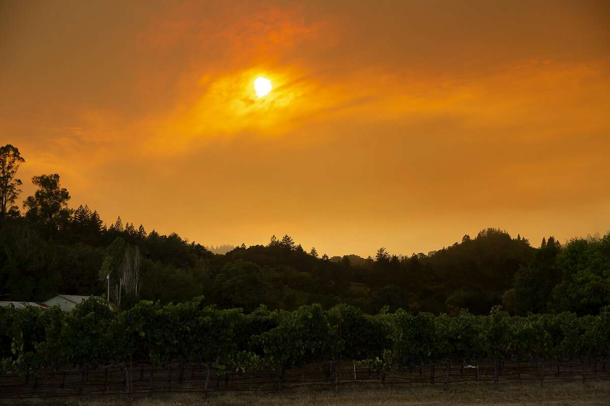 The sky is filled with thick smoke above grapevines in Sonoma County during the Walbridge Fire on Aug. 22. It was one of many fires burning in California during that time.