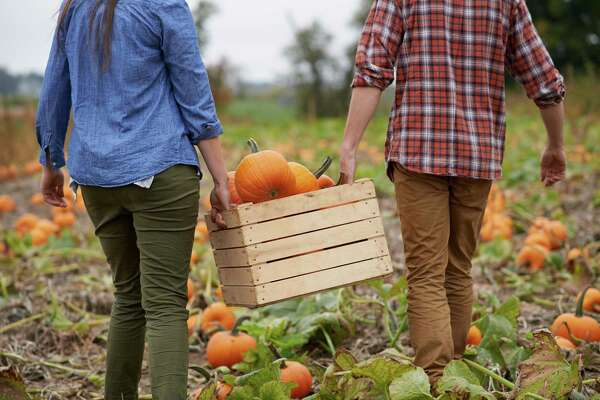 Visit a Pumpkin Patch: Already a great autumnal outdoor activity, many pumpkin patches, apple orchards, and farms are implementing social distancing protocols for their visitors. Make sure to grab some apple cider while you're there. More: The 9 Best Pumpkin Patches Near NYC