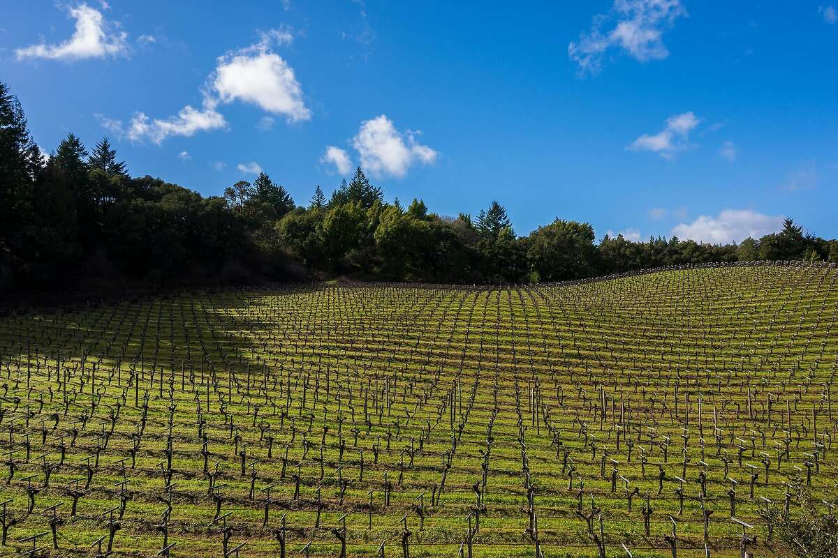 Estate vineyards at Thomas Fogarty Winery in Woodside, Calif.