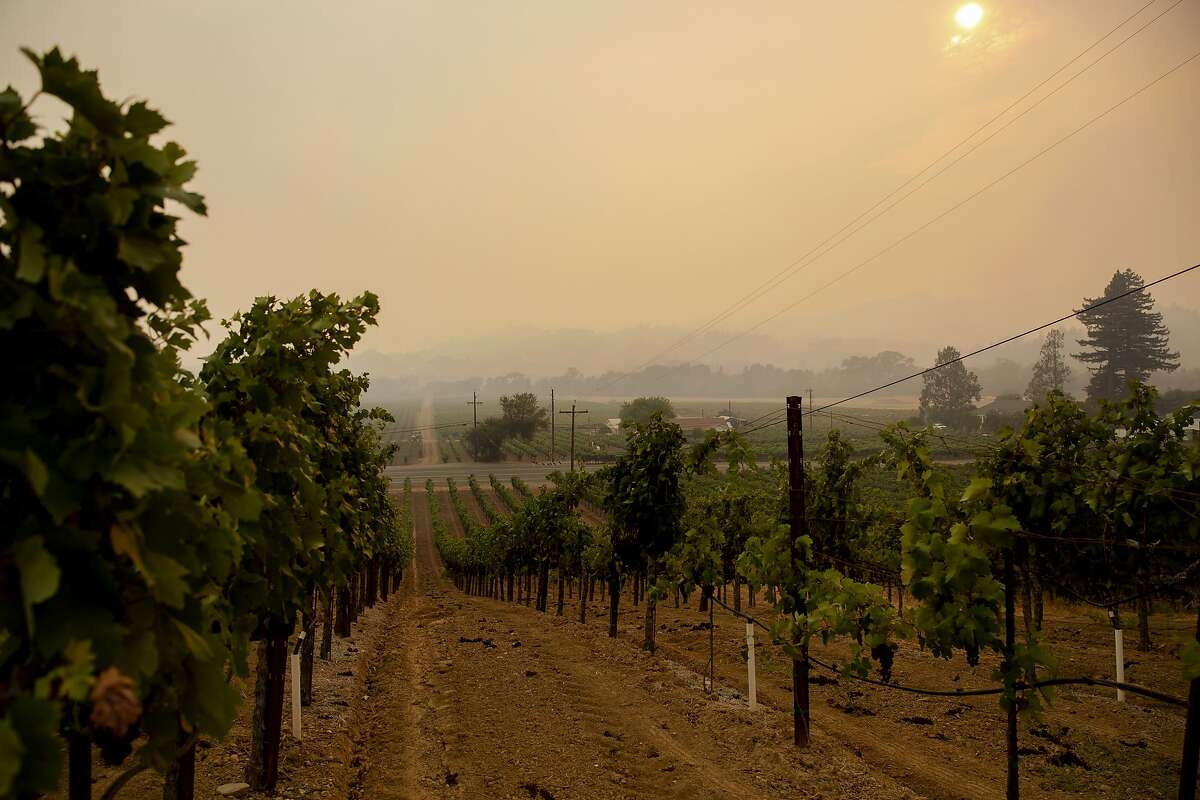 The sky is filled with thick smoke above grape vines along Dry Creek Road in Healdsburg, Calif. during the Walbridge fire on Saturday, August 22, 2020.