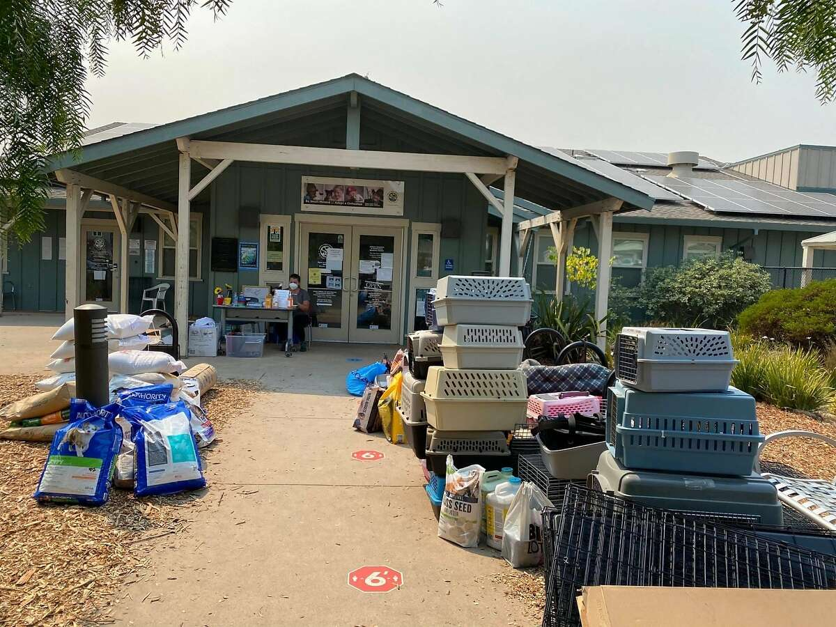 The Santa Cruz County Animal Shelter has received lots of donated supplies including food, crates, bedding and cat litter, which is placed at the front of the shelter for evacuees from the CZU Lightning Complex wildfire to pick up.