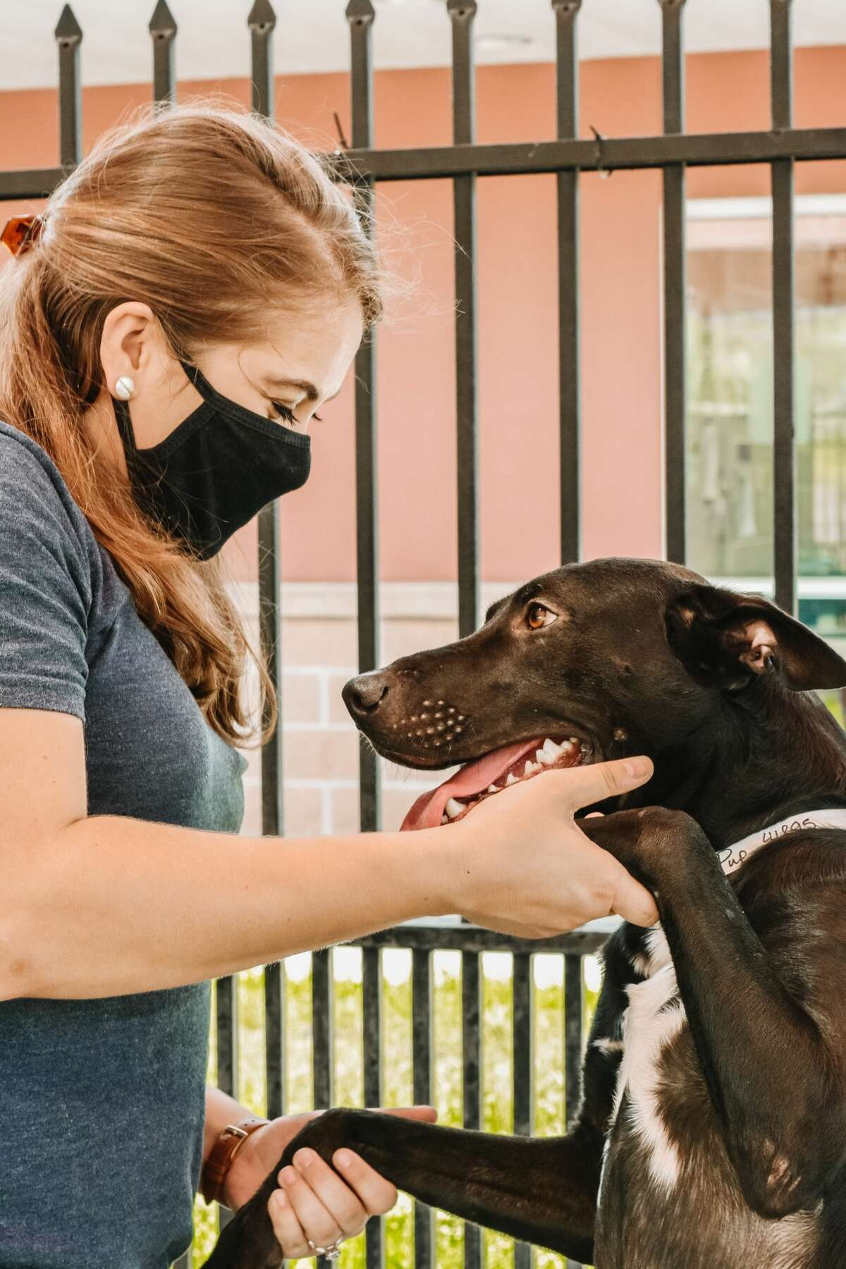 The 12 animals are currently receiving medical treatment and care at San Antonio Pets Alive!'s medical clinic at 9107 Marbach Rd., according to the news release.