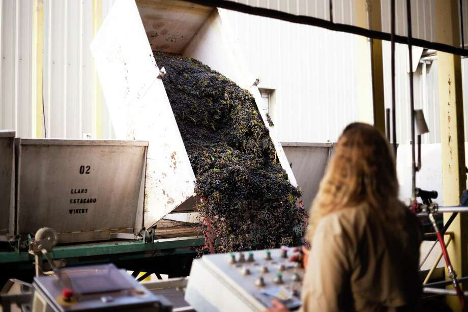 Cabernet Sauvignon grapes being dumped into the CRUSH hopper at Llano Estacado Winery in Lubbock. The harvest is going well through COVID complications. Texas wineries need your help NOW. Texas wine supporters can lean more at savetexaswineries.org and #SaveTexasWineries. Photo: Courtesy Photo