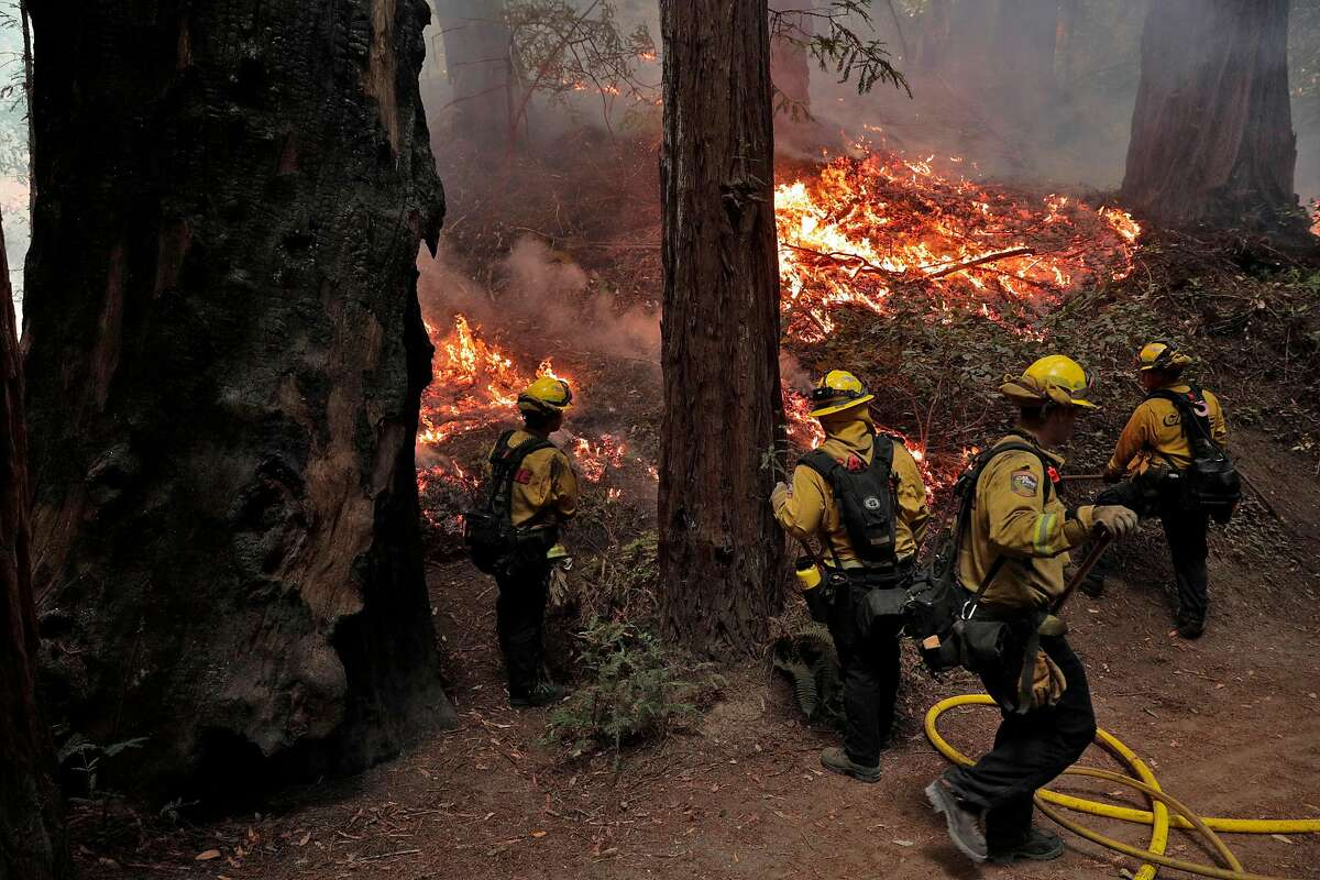 Calfire firefighters monitor a backfire as they worked the Walbridge fire in Armstrong Redwoods State Reserve protecting the heritage trees in Guerneville, Calif., on Tuesday, August 25, 2020.