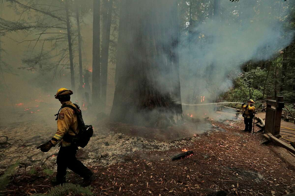 Calfire firefighters work around the Colonel Armstrong redwood tree after the crew had cut a hand line around the tree as they worked the Walbridge fire in Armstrong Redwoods State Reserve protecting the heritage trees in Guerneville, Calif., on Tuesday, August 25, 2020.