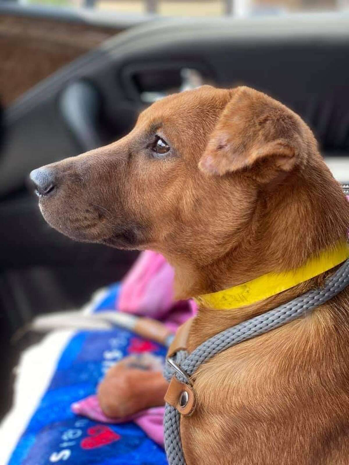 Hurricane Laura will displace hundreds of animals across Houston and Galveston over the next couple of days. Rescued Pets Movement is preparing to save as many of them as possible, but they must #ClearTheShelter in their facility first.