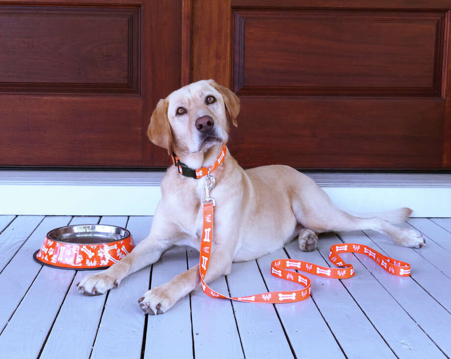 Now, your four-legged friends can show off their Whataburger love with a brand new line of pet merchandise from San Antonio's favorite burger spot. Photo: Whataburger