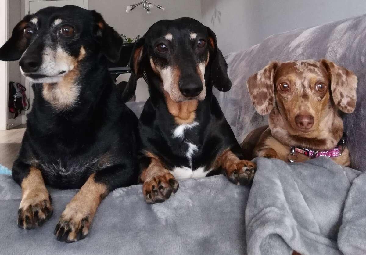 Gorda, Scraps and Scarlett, from West Hartford.