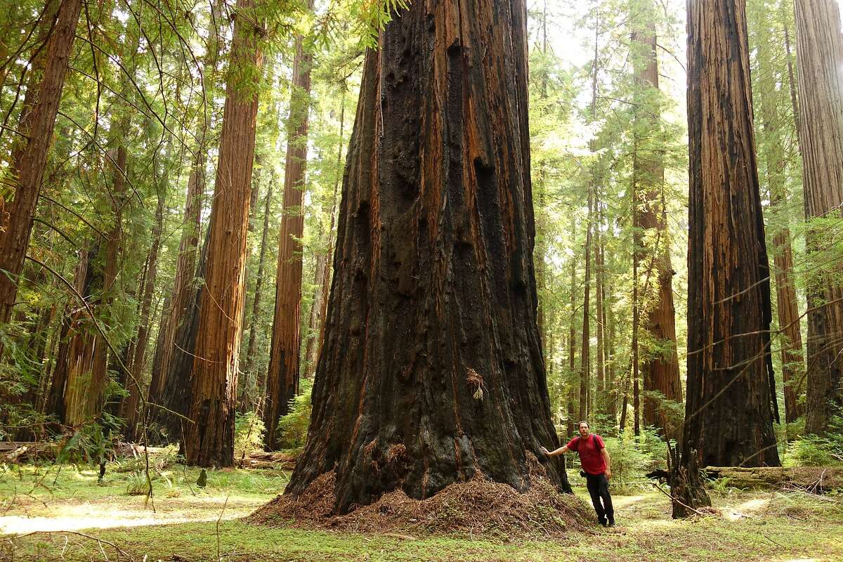 Photographer John Harvey took this self image standing next to a forest giant that survived and is thriving after the 2003 wildfire in Humboldt Redwoods State Park