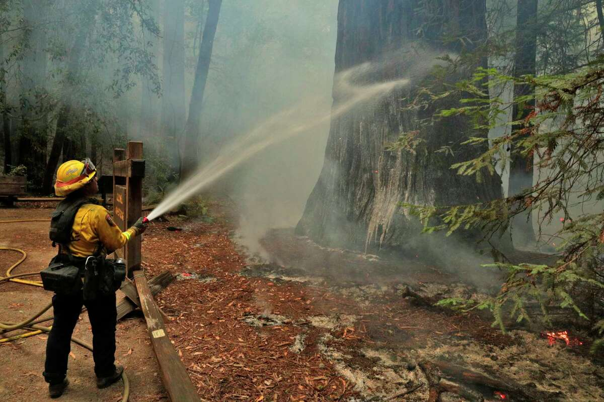 Cal Fire firefighter Juan Chavarin sprays down the Colonel Armstrong redwood tree with foam on Tuesday.