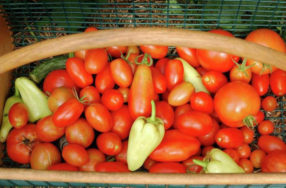 Heirloom tomatoes on display at a previous grange fair. Photo: Dru Nadler / ST / 00004107A