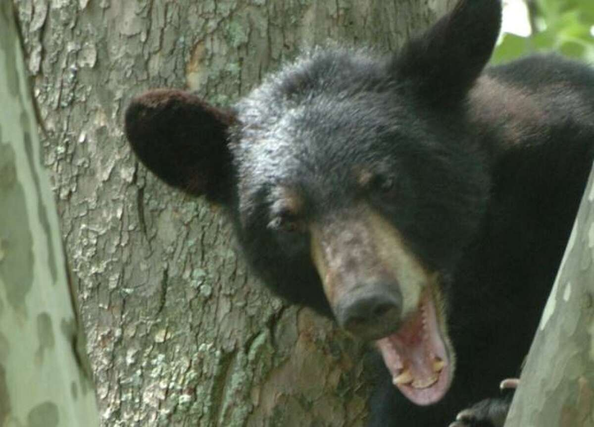 Tables were turned on a 19-year-old woman who recently climbed a tree to flee a bear.