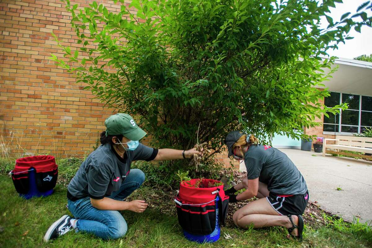 Rana Hasimu, left, and Emily Small, right, pull weeds near the entrance to Windover High School as they work as part of a group of volunteers from Dow to clear debris and plant landscaping at the school Thursday, Aug. 27, 2020. (Katy Kildee/kkildee@mdn.net)