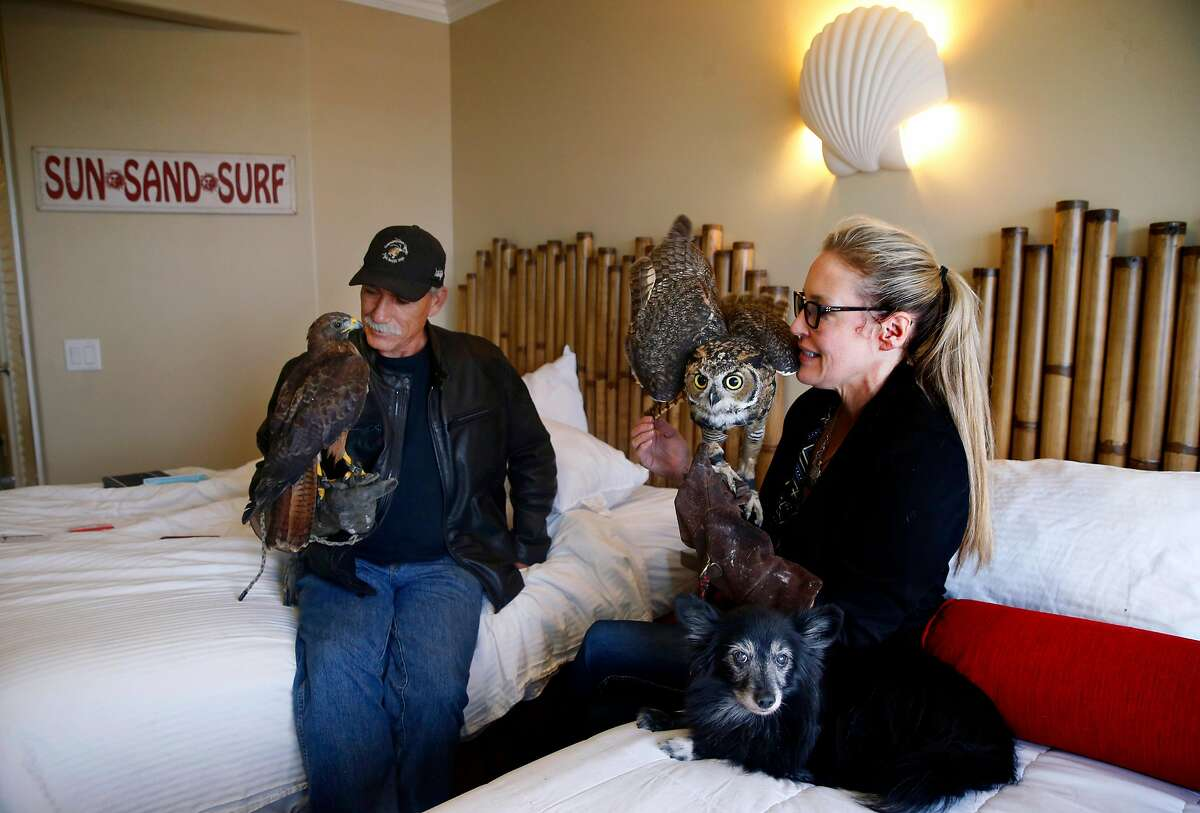 Kevin Foster holds Titan, the red-tailed hawk, and Kathryn Brubaker sits with great-horned owl Zeus and dog Foxy in their room at the Beach Street Inn and Suites in Santa Cruz, Calif. on Thursday, Aug. 27, 2020. Hotels have experienced a spike in occupancies after welcoming local residents that have been temporarily displaced by wildfires.