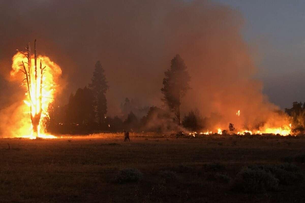 CZU wildfire destruction at Deerhaven Herb & Flower farm.