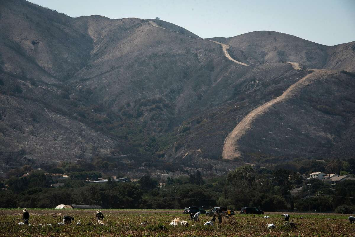 Masked workers pull tarps up from raspberry fields in Salinas in front of a burnt Mount Toro on Aug. 25, 2020.