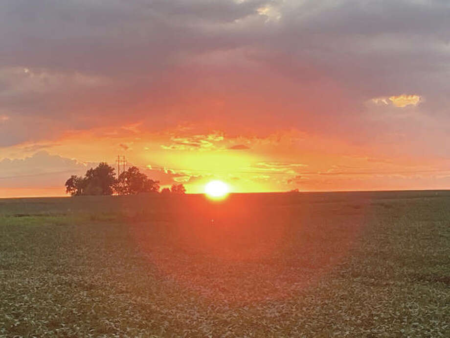 The sunset paints the sky over a beanfield in Macoupin County. Photo: Adam Wallace | Reader Photo
