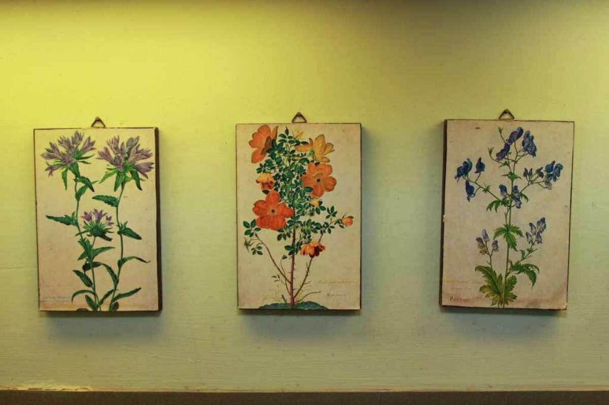 A Chatham house celebrates its natural setting. (Nancy Bruno / life@home)