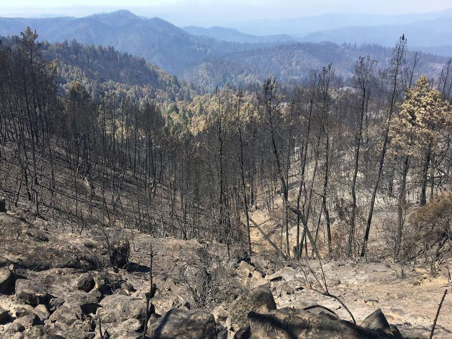 View of burned trees looking northwest from Eagle Repeater into the basin. Photo: © California State Parks, All Rights Reserved