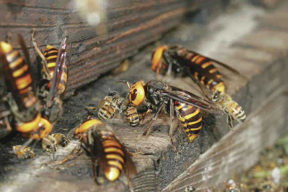 While they can be intimidating insects, wasps serve a beneficial purpose in nature's cycle. Photo: Getty Images