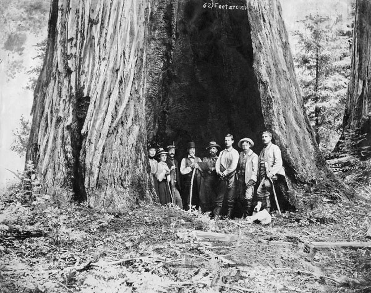 Some members of the Sempervirens Club standing in the Auto tree, including, from left, Louise C. Jones, Carrie Stevens Walter, J. F. Coope, J. Q. Packard, Andy Baldwin, Charles W. Reed, W. W. Richards, and Roley, c. 1890s.