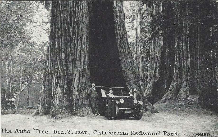 The Auto Tree at California Redwood Park, c. 1920. Photo: Santa Cruz Public Libraries