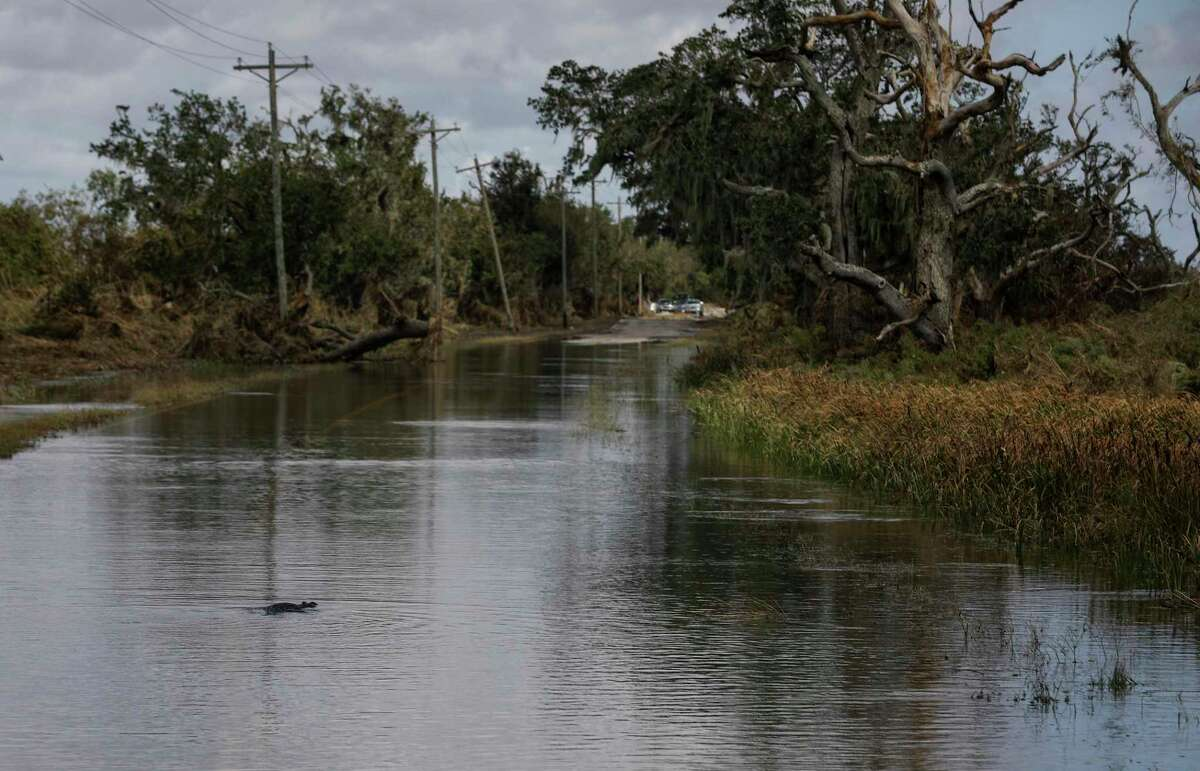 An alligator in a flooded roadway Saturday, Aug. 29, 2020, in Cameron Parish near Grand Chenier, La. Hurricane Laura made landfall nearby early Thursday morning.