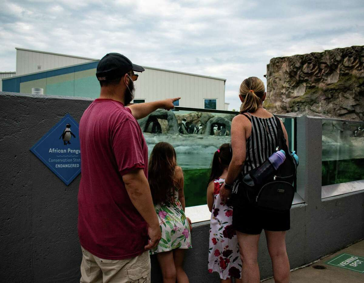 A family checks out the penguins at Mystic Aquarium, which is also home to New England's only beluga whales, as well as more than 300 species of other creatures.
