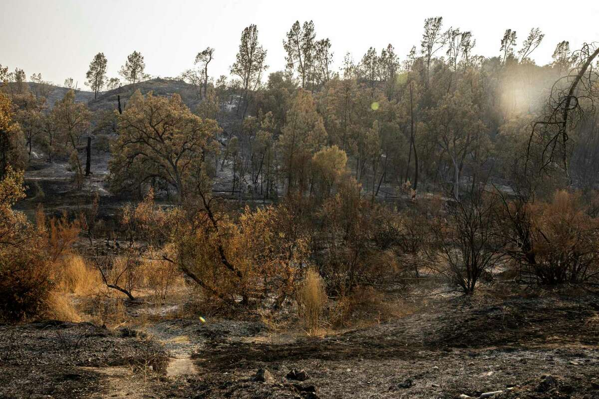 In the aftermath of the LNU Lightning Complex fires along Pope Canyon Road, burned and damaged vegetation on Saturday, Aug. 29, 2020, in Walter Springs, Calif.