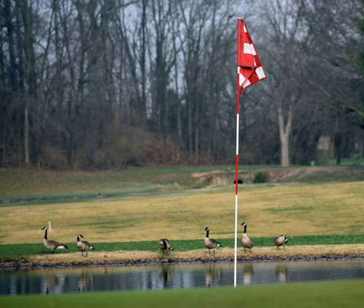 Oak Brook Golf Club could be the home for a junior golf tournament this fall that would feature top golfers from around the state.