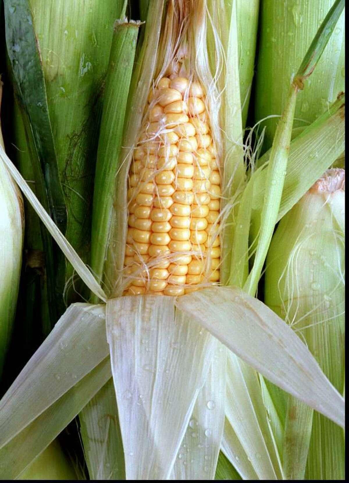 Corn on the cob. .