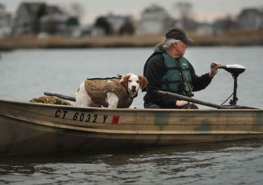 A Shelton man and his dog go out hunting for goose on the Housatonic Marsh in Milford, Conn., taken on Monday, Feb. 1, 2016. Photo: File Photo