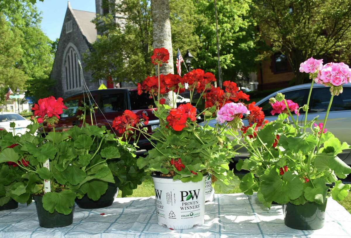 The Garden Club of New Milford will hold its annual plant sale Sept. 12 on the Village Green. Above is a table of geraniums for sale at last year's event.