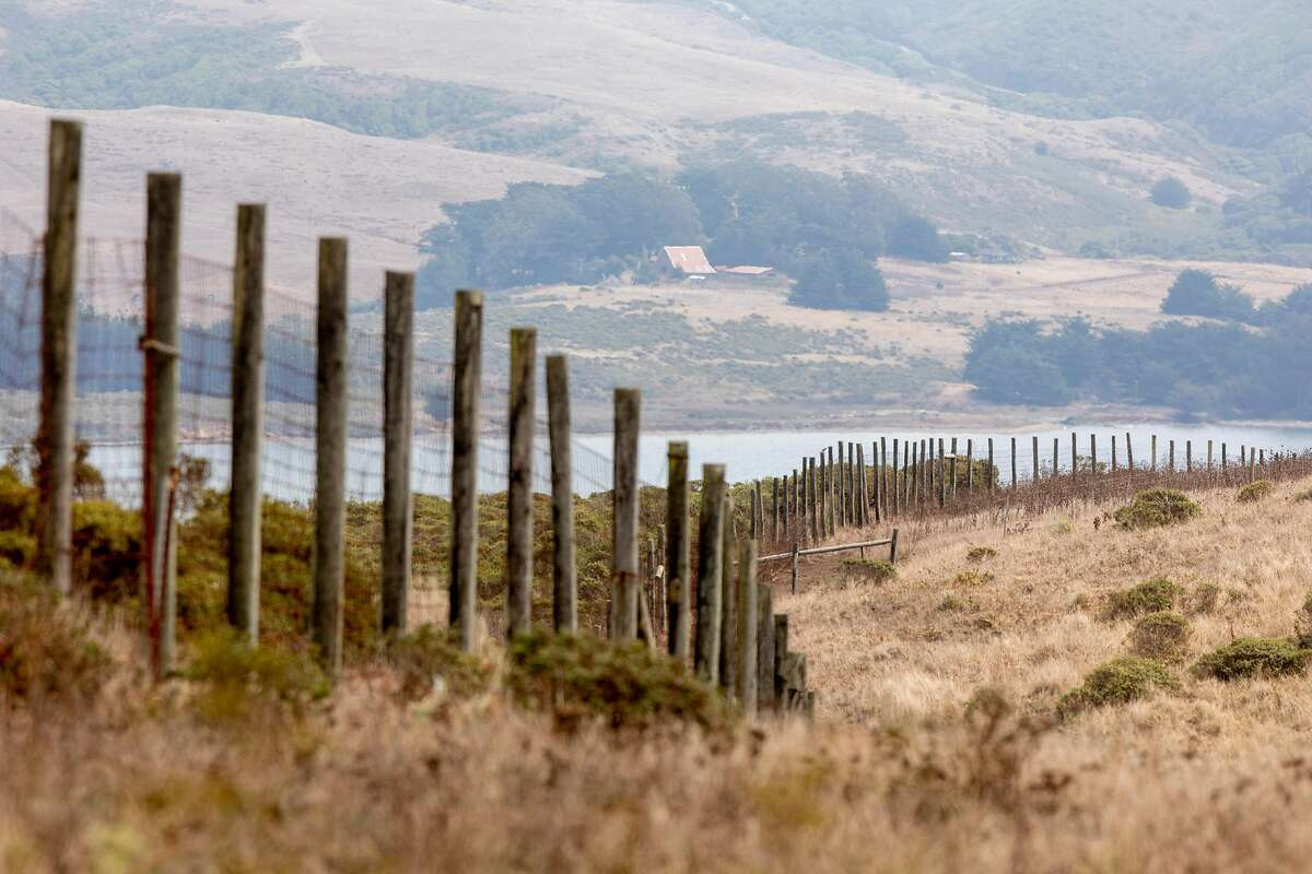A large fence is seen surrounding the Tomales Point Tule Elk Reserve inside Point Reyes National Seashore in Inverness, Calif. Friday, August 28, 2020. Park administrators and wildlife advocates are at odds over providing additional water for the captive tule elk herd at the Tomales Point Tule Elk Reserve at Pierce Point. Advocates claim the elk are dying of thirst because five have been found dead recently, the park service says they're just fine. Advocates want park service to full up water troughs but NPS has refused.