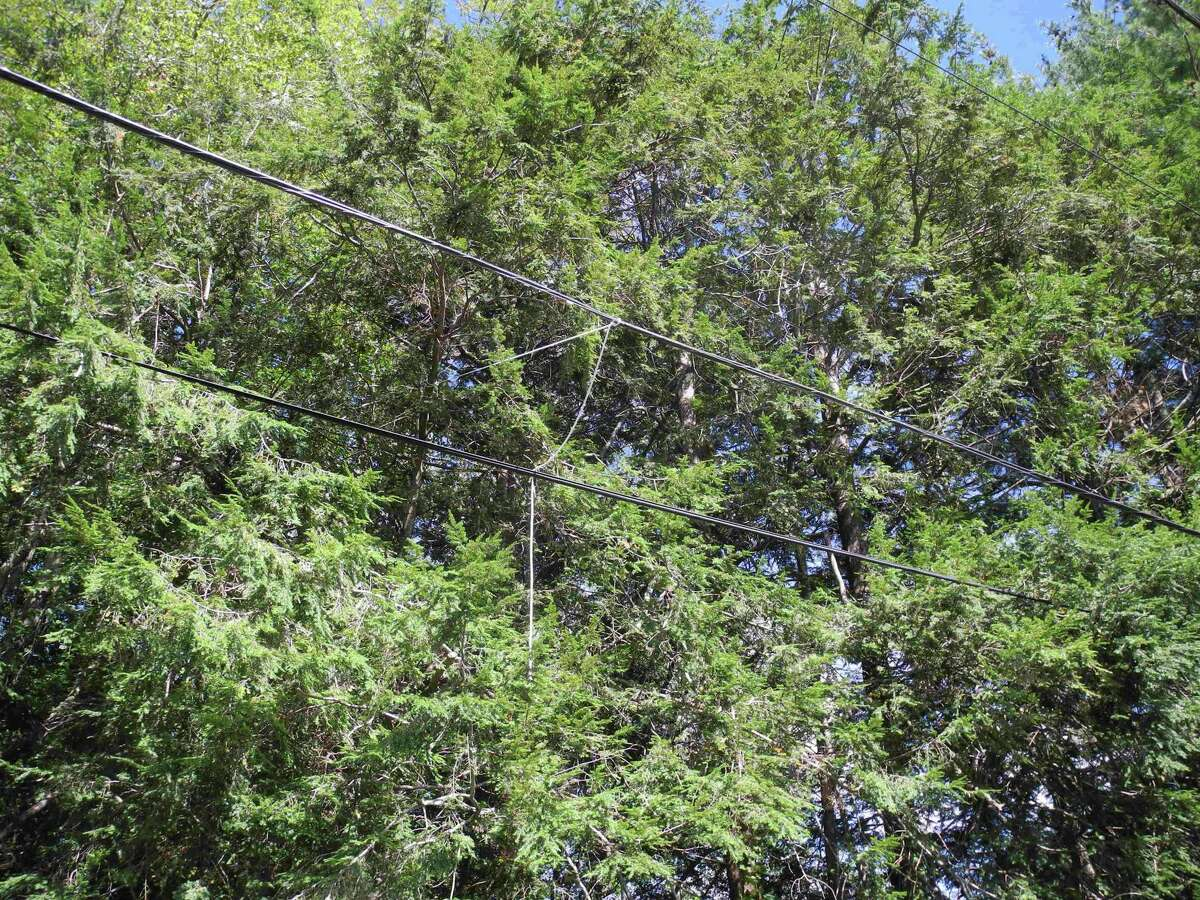 Wires are tied to a tree on Catalpa Road to keep them from hanging in the road on Aug. 30. The wires have been hanging since Tropical Storm Isaias came through on Aug. 4.