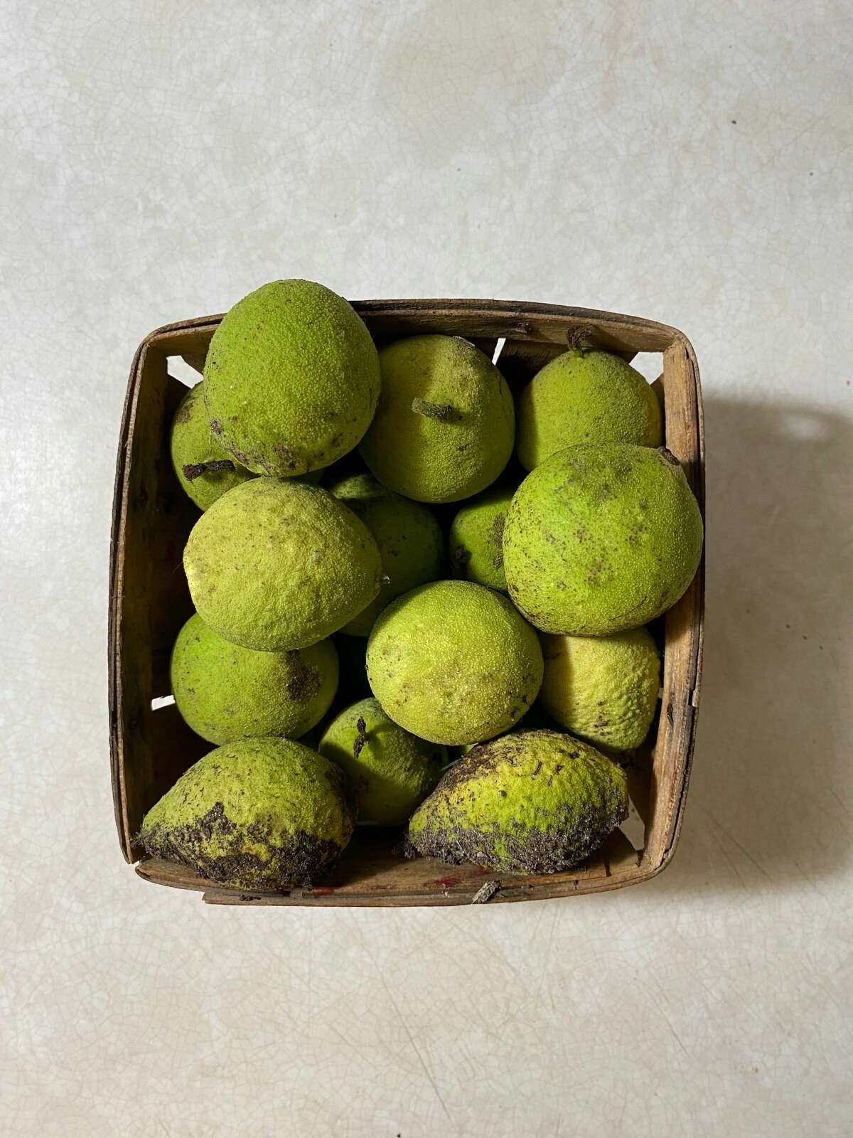 A collection of black walnuts from Stephanie Gravalese's yard.