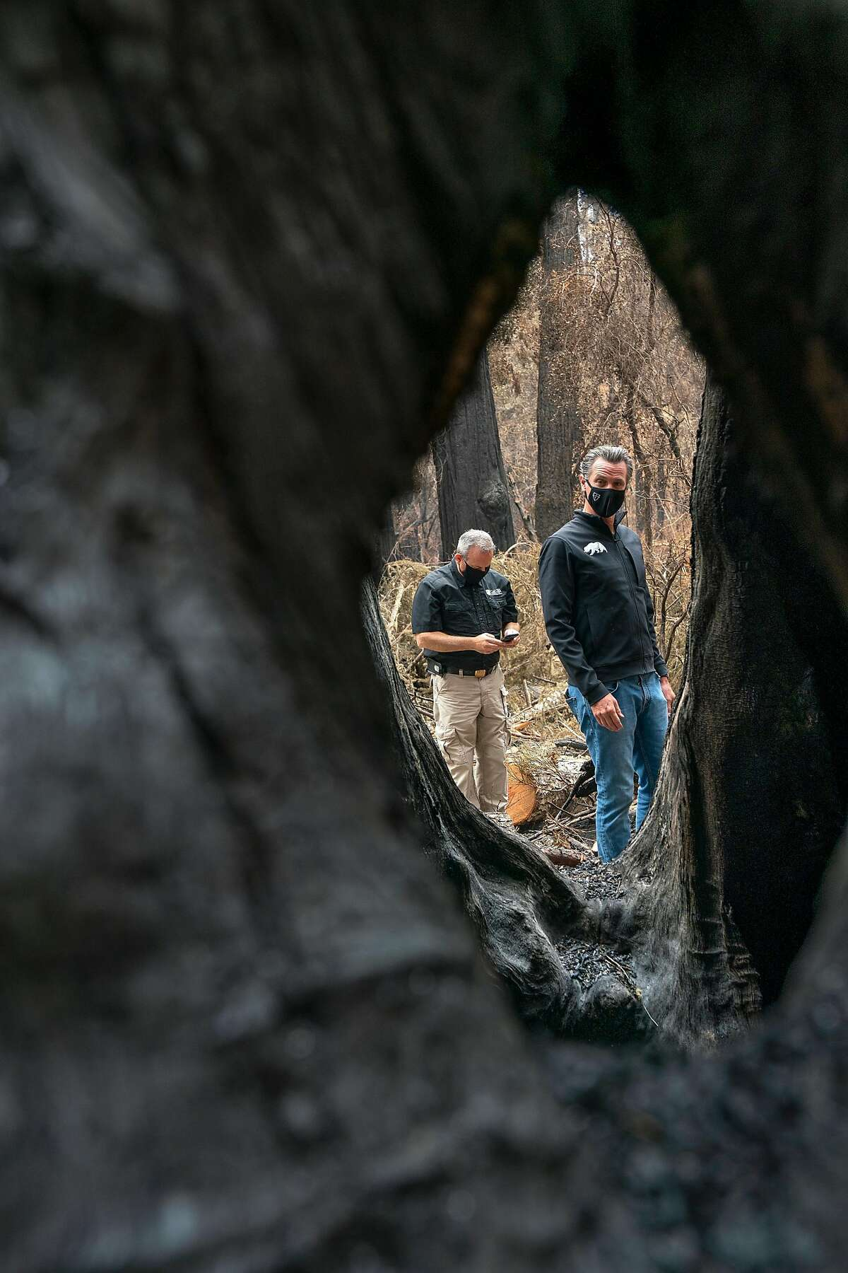 Governor Gavin Newsom looks through the hole at the trunk of the Mother of the Forest Redwood tree as he tours the fire damage to Big Basin Redwoods State Park on Tuesday, Sept. 1, 2020 in Boulder Creek, Calif. The Mother of the Forest Redwood tree is the tallest tree in the park.