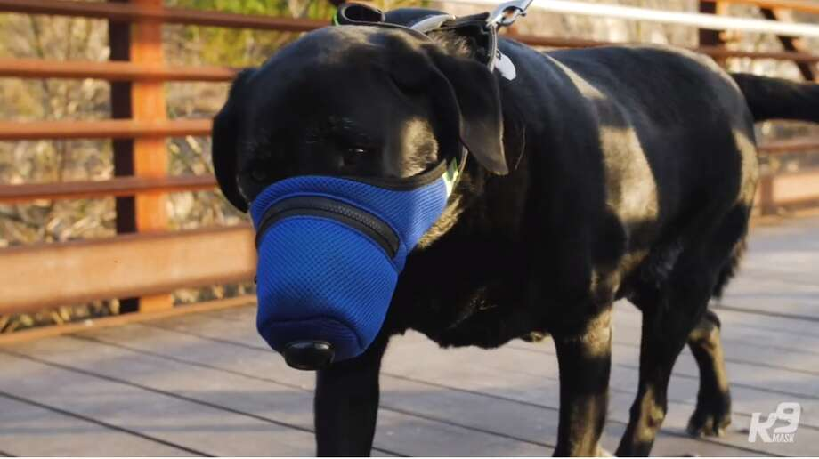 New air filter mask designed for dogs to protect them from the long-term health dangers of wildfire smoke, ash, dust, smog, chemicals, and other toxins. Photo: Screenshot K9 Mask Video