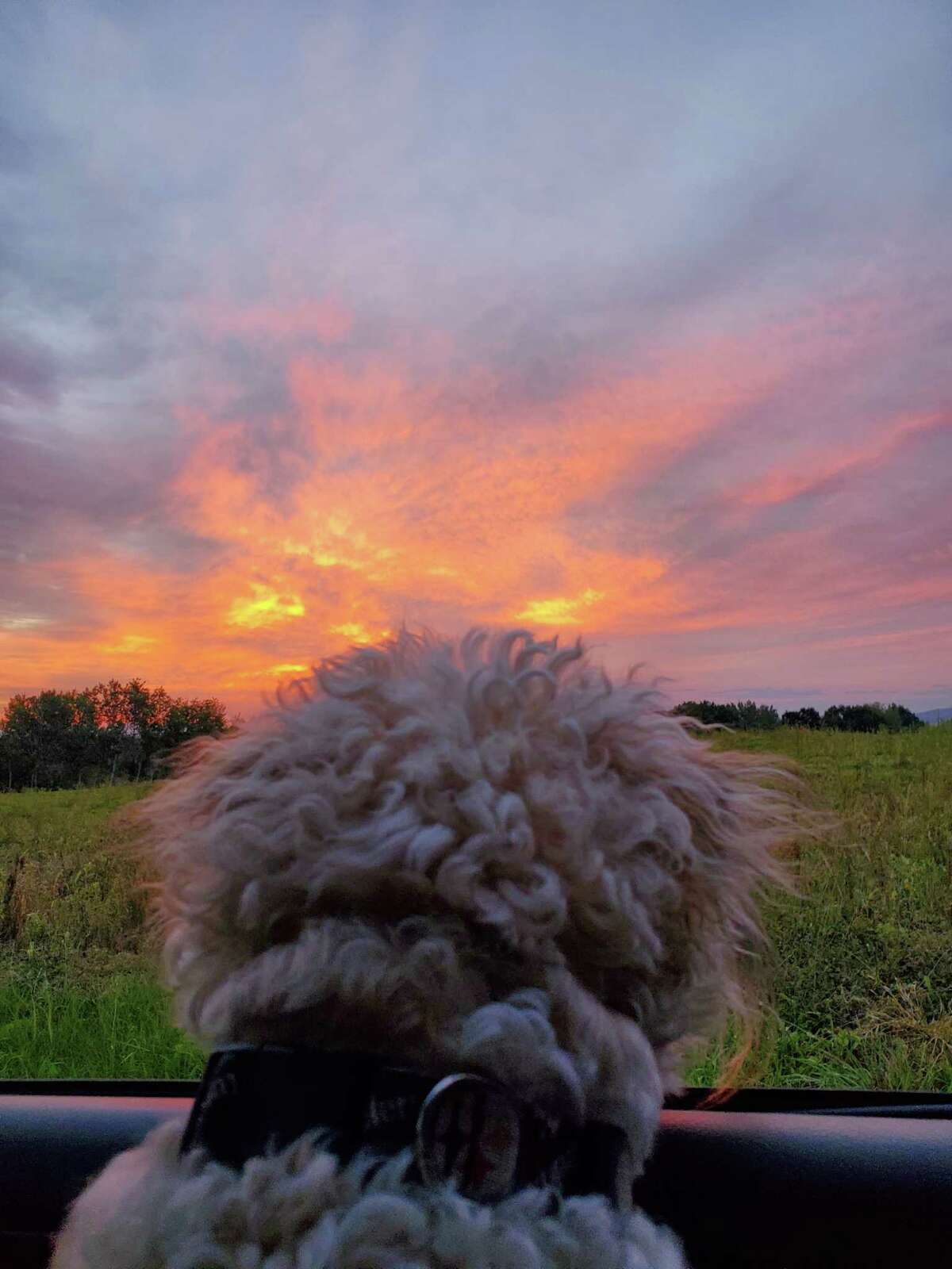 From Rich Jacobson: Bailey gets a view of the sunrise on Button Road in Halfmoon.