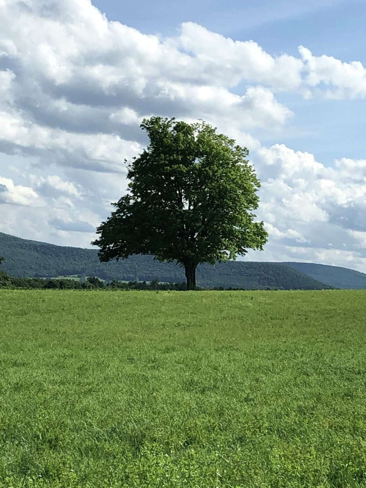 From Marie Hallock of Colonie: This is a shot called 'The Tree' in Schoharie.