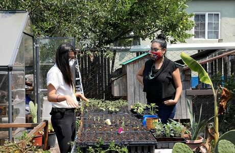 Lil Milagro Henriquez, right, converses with colleague Linda Le as she gardens in Henriquez's backyard on Saturday, August 22, 2020, in Oakland, Calif. Henriquez is the executive director of Mycelium Youth Network, a STEM education organization with focuses on climate and ancestral knowledge.
