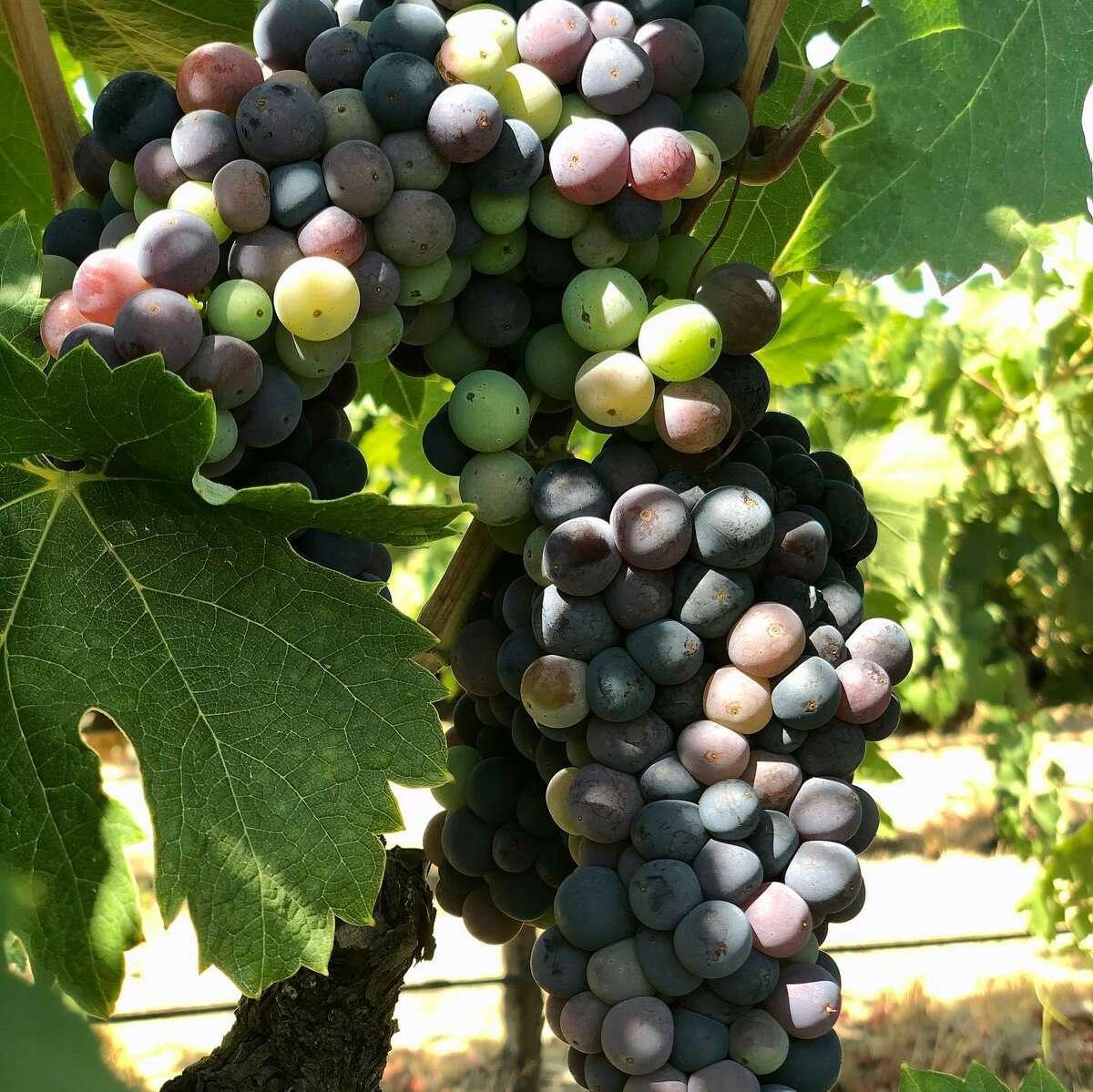 Berghold Vineyards offers popular signatures like Viognier, Zinfandel and Ruby Port.
